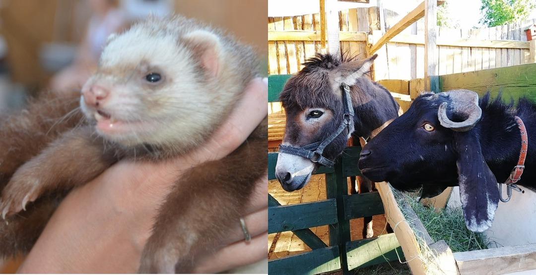 Посещение контактного зоопарка для двоих Zveropolis ХрюБеМения в 6-а мкр Заозерного