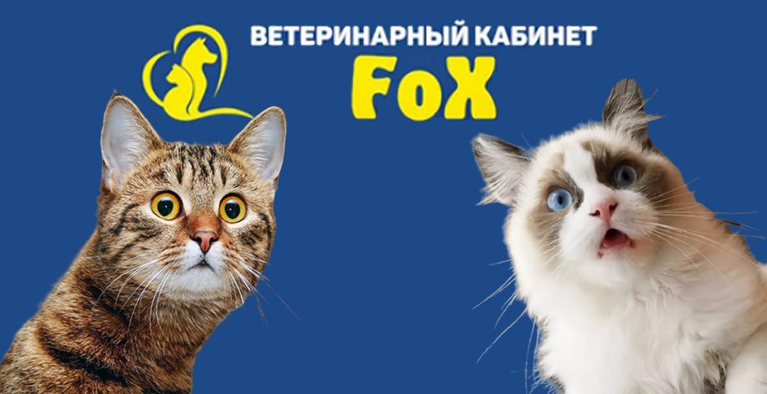Кастрация и стерилизация кошек в клинике FOX